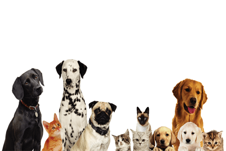 Dog and Cat Pet Care Banner