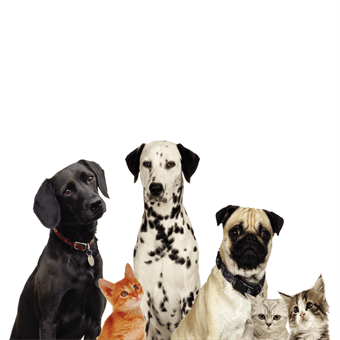 Dog and Cat Pet Care Backdrop: 533-7
