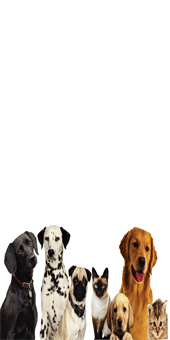 Dog and Cat Pet Care Pole Banner: 533-9