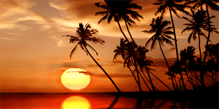 Sunset With Palm Trees Backdrop: 513-1