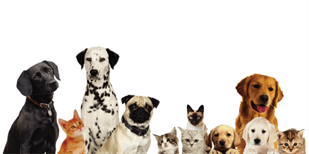 Dog and Cat Pet Care Check: 533-1